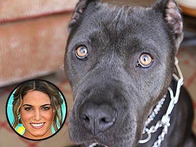 Nikki reed raising a rescue dog twilight lexicon